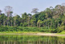 Photo of Таман Негара в дебрях Малайских джунглей
