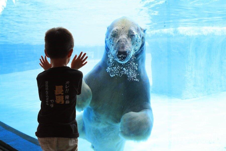Мальчик и белый медведь