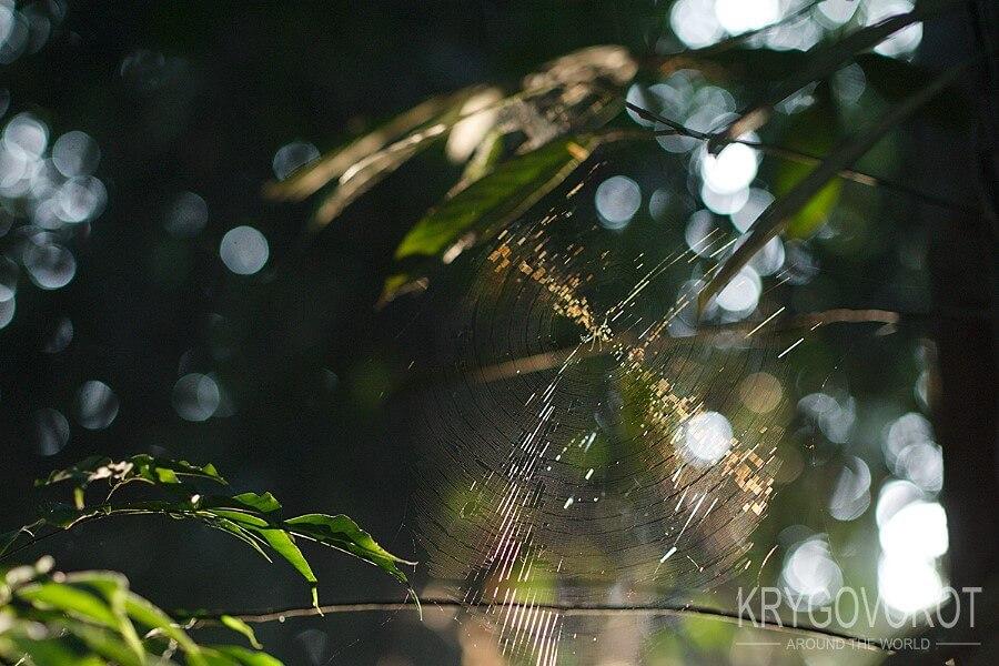 Паутина в джунглях