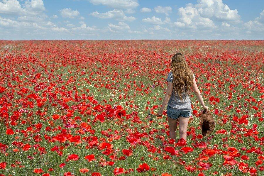 поле в Крыму